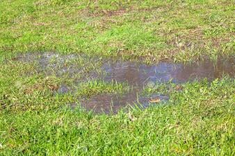 64152696-view-of-a-grass-and-puddle